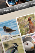Highland Birdwatch & Wildlife Safaris web site
